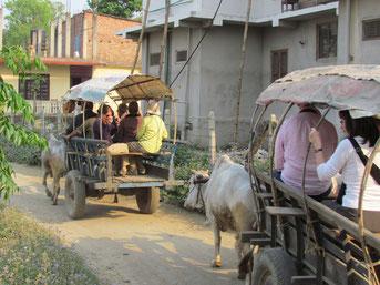 im Ochsenwagen auf Tour