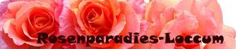 Rosenparadies Loccum