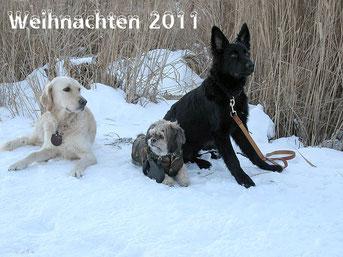 Wanderung Haidersee 12.2011