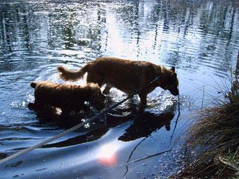 Foto von Lisa: Cora und Hexe  Meine Cora (Schäfermischling) starb leider am 12. November 2008 ,  meine Hexe musste am 21. April 2012 eingeschläfert werden.