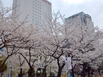 タケさん:東京都墨田区・錦糸公園