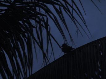 Besuch kurz nach Sonnenuntergang auf dem Campingplatz