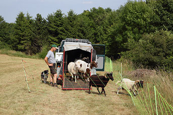 Schäfer Ehlers bringt Schafe und Ziegen. Foto: Volker Schadach