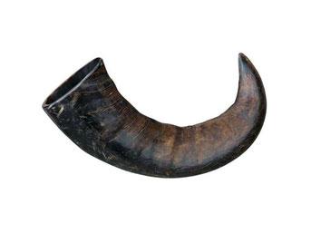 Büffel-Kauhorn