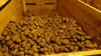 Kartoffelkeller: Faulende aussortieren und das Wasser im Luftentfeuchter entleeren.