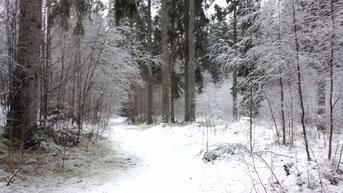 Weg durch unseren Hofeigenen Wald