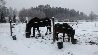 Und die Pferde auch!