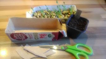 Neues Erbsen grün alle drei Tage. Aus Milch- und Saftkartons werden Saatkästen und auch  Etiketten zum Beschriften.