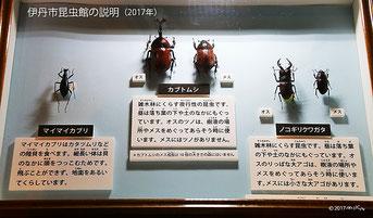 伊丹市立昆虫館のカブトムシとクワガタの説明