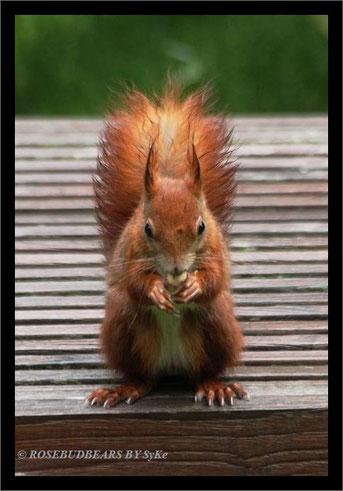 Aber wenn ein Eichhörnchen Hunger hat, nimmt es auch Regen in Kauf