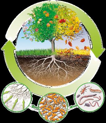 Biologischer Kreislauf der Natur (Quelle: terra institute)