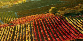 リオハの景観 (www.vinetur.com)