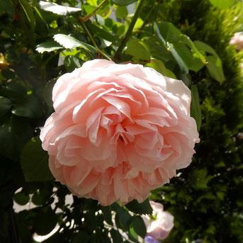 Garden Necklaceは6月3日まで!