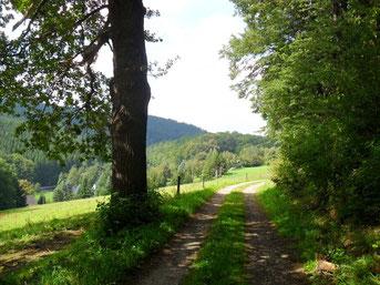 Blick zurück am Waldrand