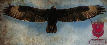 Shqiponja mbretërore dhe stema ilire