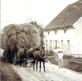 """Getreide-Wagen voll beladen mit """"Korn-Garben"""" zum Dreschen, gezogen von 3 Pferden - 3 PS.  Kleinwolmsdorf 1904"""