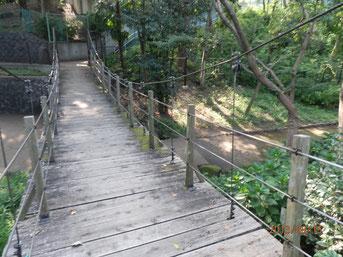 緑のつり橋