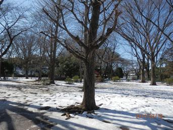 雪の高稲荷公園。左奥の高台に神社がある。