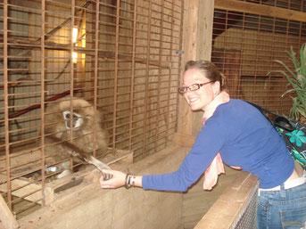 Affen in Blavand