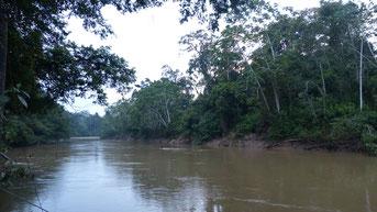 Imagen del Río Tiputini, cerca del embarcadero de la Estación Científica Yasuní