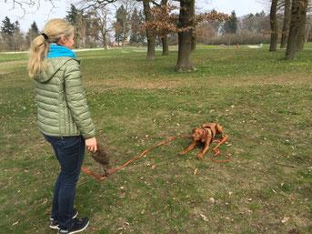 Hundeschule, Seminare, Beschäftigung, Jagdhund, Pia Gröning, positive Verstärkung, ohne Gewalt