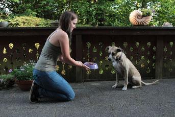 Hundefütterung, Hund, artgerechte Hundefütterung, Hundeernährungsberater