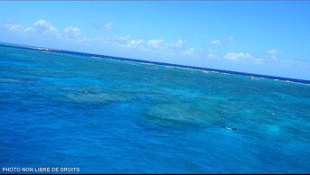 Récif coralien en péril, Australie