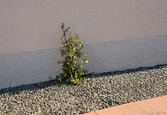 Regentropfen, Blatt, Natur