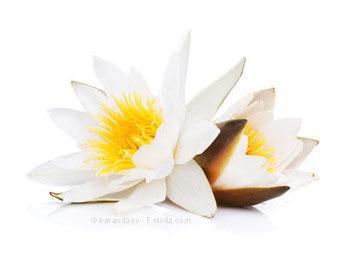 Lotus von Reiki Ausbildung