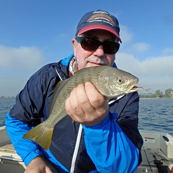 Yellowfin Croaker from San Diego Bay