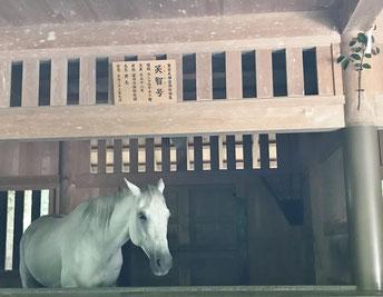 外宮で神馬に会えました