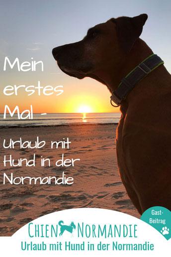 Mein erstes Mal – Hundeurlaub in der Normandie