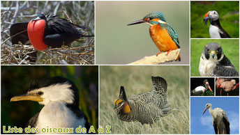 fiches animaux liste des oiseaux