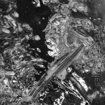 Multi-BioMorph-2, Fotografie 2017