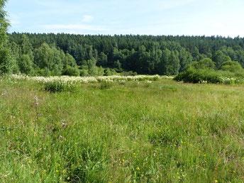 Baldrian-Scheckenfalter Melitaea diamina in Sachsen Tagfalter Pollrich