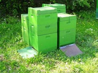 Beuten aus Styropor von D. Jöckel (grün gestrichen)