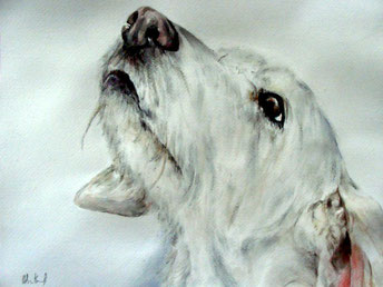 Hundeportrait als Aquarell gemalt.
