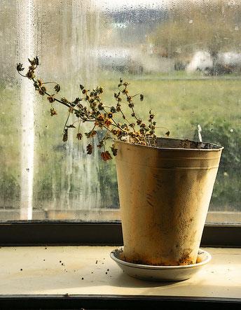 Un gros pot de plante morte desséchée sur un rebord de cuisine, avec un paysage voilé derrière