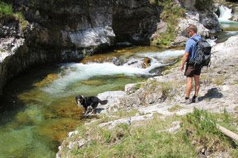 Wandern mit hund; Wandern im FRühjahr; Wandertouren mit Hund
