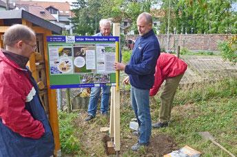 NABU-Meile Wiesloch, Aufstellung des Informationsschilds zu Wildbienen, Foto: A. Treffer