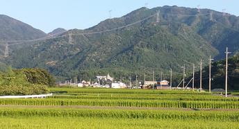 夏は特に昼夜の気温差が大きいため美味しいお米ができる写真