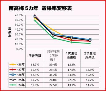2016梅着果率推移表【1次生理落果期:南高梅】 和×夢 nagomu farm