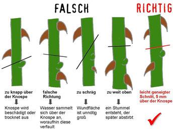 Bild: www.liebedeinengarten.de