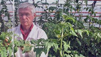 """Quelle confiance accorder aux plantes de laboratoire ? (image film """"Semences du Futur"""")"""