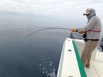 Fighting a Skipjack Tuna