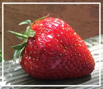 Erdbeere©ChristinaBecker #Saison Juni Februar #Obst#Gemüse#Exoten