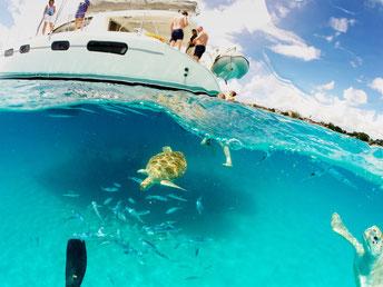 Carlisle Bay, Schnorcheln Barbados, Schildkröten