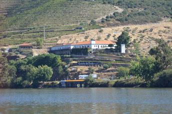 Am Douro: Weingut Quinta do Tedo