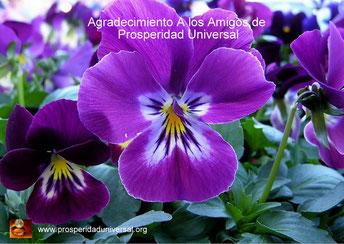 ADELGAZA FÁCILMENTE - AGRADECIMIENTO A LOS AMIGOS DE PROSPERIDAD UNIVERSAL