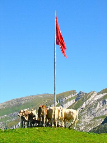 Alp Selun, Churfirsten, Kühe, Schweizer Flagge